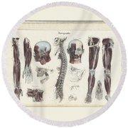 Anatomie Methodique Illustrations Round Beach Towel