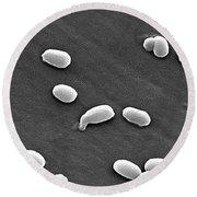 Anthrax Bacteria, Sem Round Beach Towel