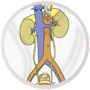 Illustration Of Female Urinary System Round Beach Towel