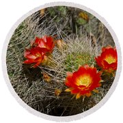 Red Cactus Flowers Round Beach Towel