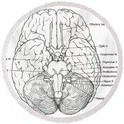 Illustration Of Cranial Nerves Round Beach Towel
