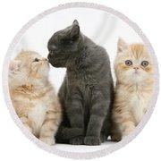 Kittens Round Beach Towel