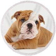 Bulldog Pup Round Beach Towel