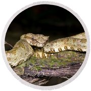 Eyelash Viper Round Beach Towel