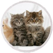 Maine Coon Kittens Round Beach Towel