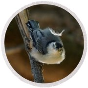 Nuthatch Round Beach Towel