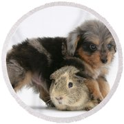 Puppy And Guinea Pig Round Beach Towel