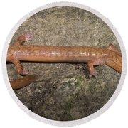 West Virginia Spring Salamander Round Beach Towel