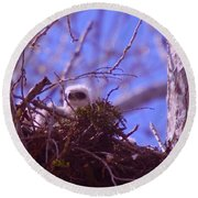 A Baby Red Tail Gazing From Its Nest Round Beach Towel