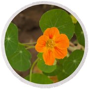 A Beautiful Orange Trumpet Shaped Flower With Green Leaves Round Beach Towel