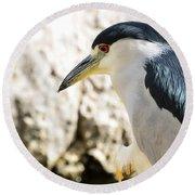 A Black-crowned Night Heron  Round Beach Towel