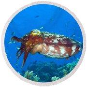 A Broadclub Cuttlefish, Kimbe Bay Round Beach Towel