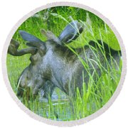 A Bull Moose Wading His Pond Round Beach Towel