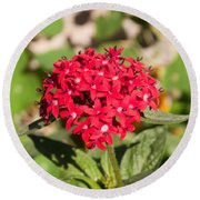 A Bunch Of Small Red Flowers Round Beach Towel