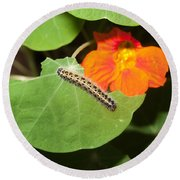 A Caterpillar Eating The Leaves Of A Plant With A Beautiful Orange Flower Round Beach Towel