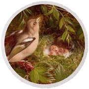 A Chaffinch At Its Nest Round Beach Towel