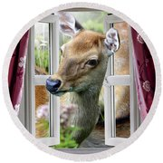 A Deer Enters The House Window. Round Beach Towel