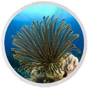 A Feather Star With Arms Extended Round Beach Towel