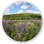 A Field Of Lupines Round Beach Towel