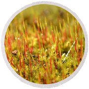 A Forest Of Moss II Round Beach Towel