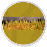 A Forest Of Moss Round Beach Towel