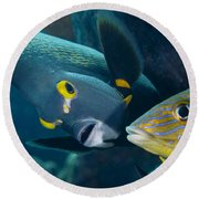 A French Angelfish Swims Up Close Round Beach Towel