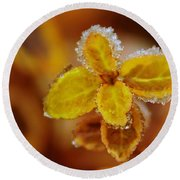 A Frosted Plant Round Beach Towel