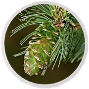A Growing Pine Cone Round Beach Towel