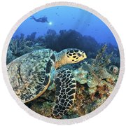 A Hawksbill Turtle Swims Round Beach Towel