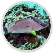 A Hogfish Swimming Above A Coral Reef Round Beach Towel