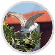 A Juvenile Herring Gull Round Beach Towel