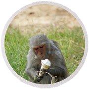 A Monkey Enjoying An Ice Cream Cone Inside Delhi Zoo Round Beach Towel