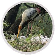 A Painted Stork Feeding Its Young At The Delhi Zoo Round Beach Towel