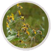 A Pair Of Goldfinches In Spokane Round Beach Towel