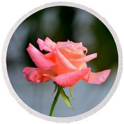 A Peachy Pink Delight Round Beach Towel