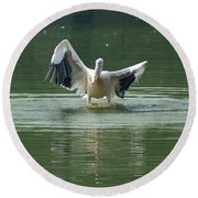 A Pelican Drying Its Wings After Landing In The Lake Inside Delhi Zoo Round Beach Towel