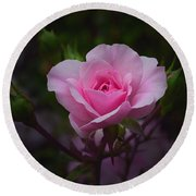 A Pink Rose Round Beach Towel by Xueling Zou