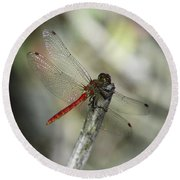 A Red Dragonfly Round Beach Towel