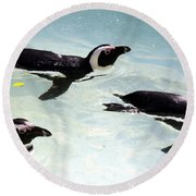 A Small Squadron Of Swimming Penguins Round Beach Towel