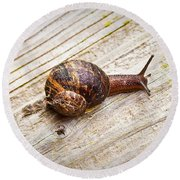 A Snail Sliding Across A Wooden Surface Round Beach Towel by Tom Gowanlock