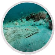 A Southern Stingray On The Sandy Bottom Round Beach Towel by Michael Wood
