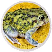A Spadefoot Toad Round Beach Towel