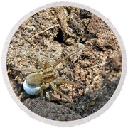 A Spider With The Egg Sack Square Round Beach Towel