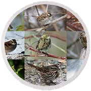 A Study In Sparrows Round Beach Towel