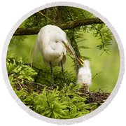 A Tender Moment - Great Egret And Chick Round Beach Towel