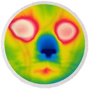 A Thermogram Of A Long Haired Cat Round Beach Towel