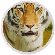 A Tiger Round Beach Towel
