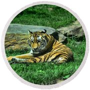A Tiger's Gaze Round Beach Towel by Paul Ward