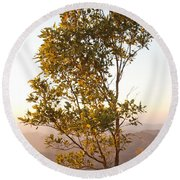 A Tree Outlined By The Rays Of The Setting Sun At Pachmarhi Round Beach Towel