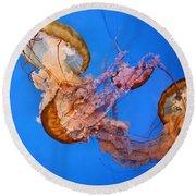 A Trio Of Jellyfish Round Beach Towel by Kristin Elmquist